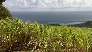 Salomonöarna väderprognos