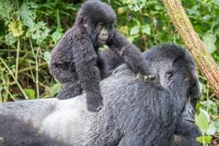 Congo,